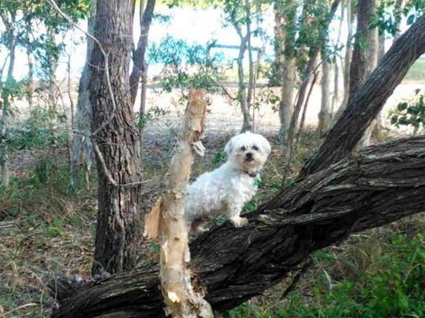 Charlie the maltese terrier passed away after being attacked by two other dogs last Thursday.