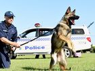 VIDEO: training day for police pups