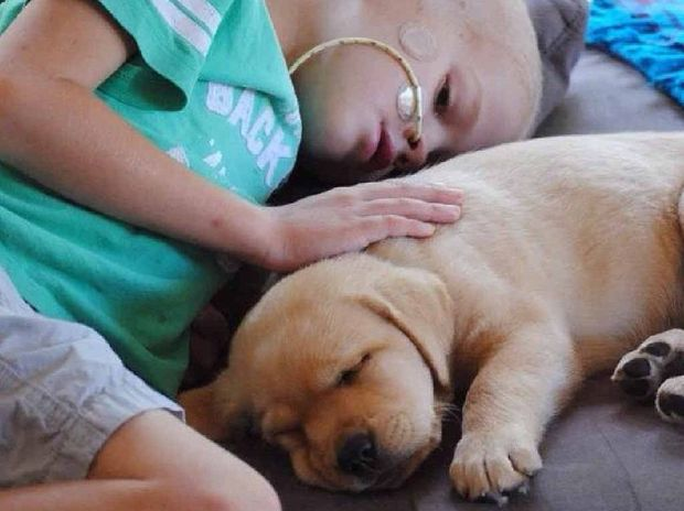 MIRACLE NEEDED: Yandina eight-year-old Sam Martin at home with his dog, Roxy. His family are asking for your prayers.