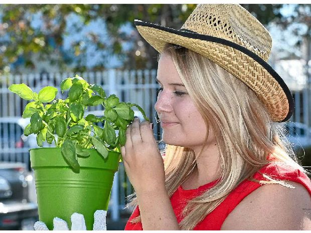 GET GROWING: Lauren Alsemgeest with her pot of fresh basil is looking forward to the free seeds giveaway.