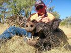 Lonely pig hunters can search for love on Facebook page