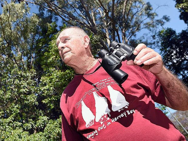 John Parsons - flying fox volunteer. Photo: Alistair Brightman / Fraser Coast Chronicle