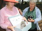East Creek Park Defenders members Barb Marshall and Jenny Wilson at the rescue a tawny frogmouth.