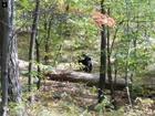 Hiker took photo of black bear moments before it killed him