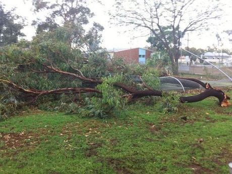 Trees across Oakey were brought down in a wild storm this afternoon.
