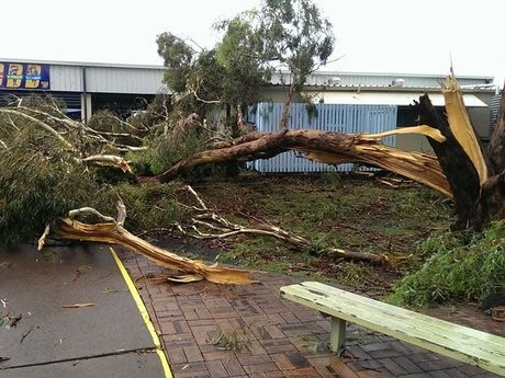 A wild storm brought down a large tree at the Oakey State Primary School. Sent to us by Abbey Halliday, who says it was one of many trees that fell during this afternoon's storm.