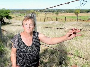Mission to save Rockhampton's deer from Christmas cull