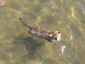 Kitten Diego's swim sparks extreme excitement
