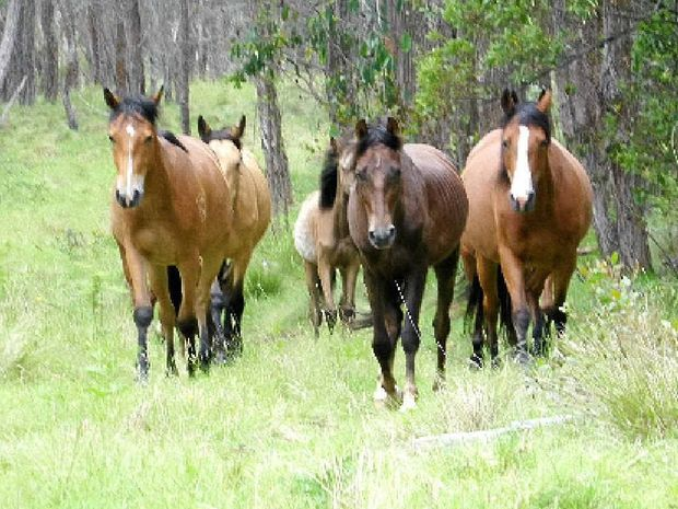 WALK IN THE PARK: The Guy Fawkes Heritage Horse Association will hold an open day on January 25. Photo: Contributed