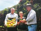 Mango and lychee farmers given green light to export to US