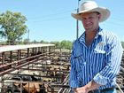 Cattle prices almost double: Agent