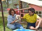 Training students help rabbits run