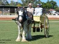 Relive history with the working horse exhibitions and displays of heavy horses in action. Held at the Gatton Showgrounds, today's Clydesdale, Shire...