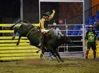 Sam Mason on Renegade in the Rookie Bull. Photo Allan Reinikka / The Morning Bulletin
