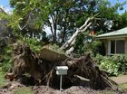 MILLBANK resident Sandra Robertson seems to be the only Bundaberg victim of Tropical Cyclone Marcia as it made its way south through Queensland.