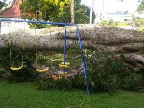A fig tree, thought to be more than 100 years old, crashed in the yard of a home on the corner of John and Queen Sts in Maryborough near a swing set where children were playing only seconds before.