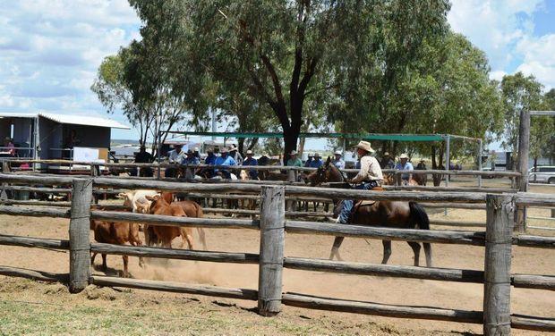 s classifieds local nsa sex Western Australia