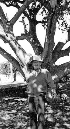 1987: Ted Bentley next to a fig tree he planted in 1955.