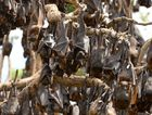 Residents urged to avoid flying foxes affected by heat