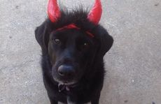 Is your dog the naughtiest on the Sunshine Coast