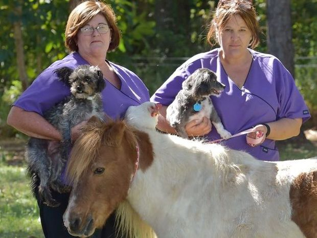 Animal lovers Nola Murphy, left, and Jo Gregory from Pets Eternal have offered to cremate the greyhounds that were discovered in bushland in Bundaberg and are now preparing a memorial with a greyhound foster care group.