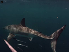 WATCH: Fisherman confronted by great white shark