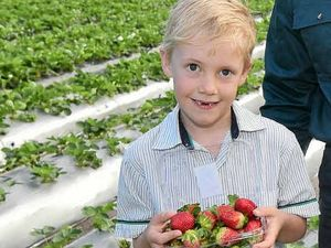 IT'S LOOKING BERRY GOOD: Farm manager Brendon Hoyle with his sons William (left) and