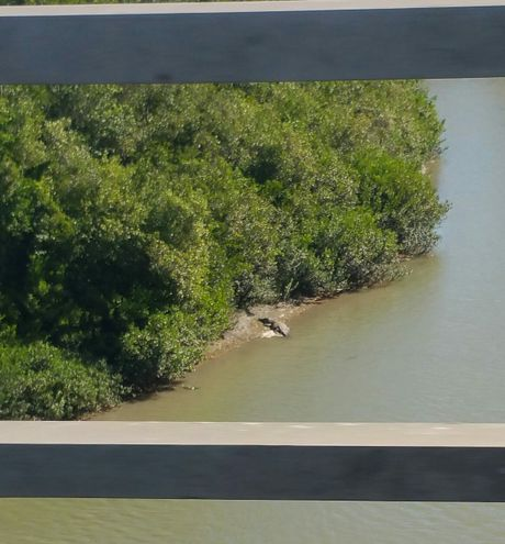 Cassy Gottfried snapped this photo of a crocodile at Sandy Creek.