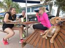 WITH doggie biscuits and pupp-cinos edging onto cafe menus, it's clear it's not just humans embracing coffee culture- four-legged friends are too.