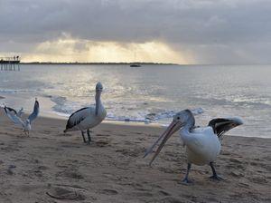 Fancy an open-air cinema on the beach?