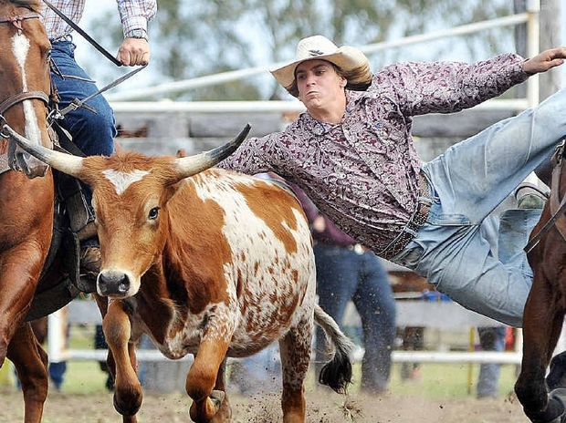 RIDING HIGH: George Wheeler from Woodford in action in the steer wrestling.