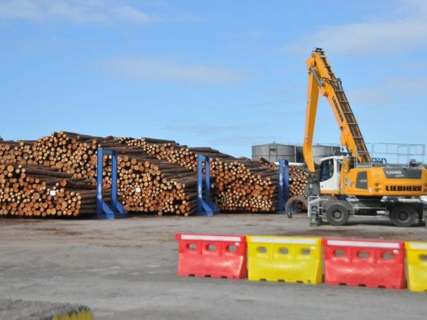 Thousands of logs sit on Auckland Point wharf ready to be shipped to China.