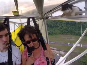 VIDEO: Cat sneaks on to plane for joyride