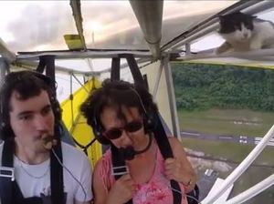 VIDEO: Daredevil cat shocks pilot mid-flight