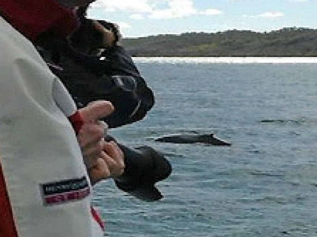 A Fraser Coast tourist spots one of the season's first humpback whales.
