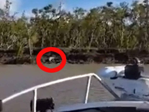 The red circle shows what is believed to be the 4m croc sitting on the riverbank before it slipped into the Fitzroy River.