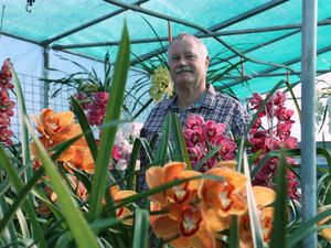 Toowoomba Orchid Society president John Terry shows off his amazing orchid flowers.