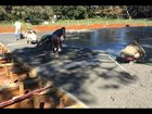 Workers at Crawford Park are laying the slab for the new Alstonville preschool.