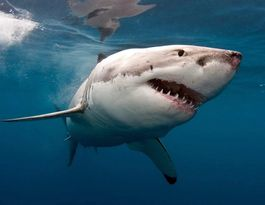 "International expert calls 2015 ""The Year Of The Shark"""