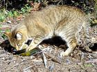 Feral cats killing wildlife but no one's acting to stop them