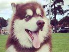 Puppy breeders fined $22K over genetic illness