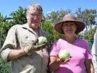 GORGEOUS GARDEN: Oakhurst green thumb Greg Smyth and his wife Dot show off fruits. Fraser Coast Chronicle / Hannah Baker