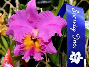 H'Bay PCYC Orchid Show, Oct 3-5.