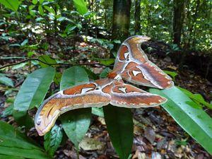 NiE In the jungle
