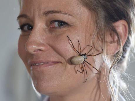 Lisa Donovan with an orb spider. Photo: Alistair Brightman / Fraser Coast Chronicle