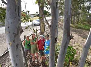 Esplanade tree chop