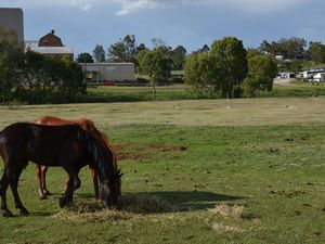 Lightning strike kills three horses in Warwick