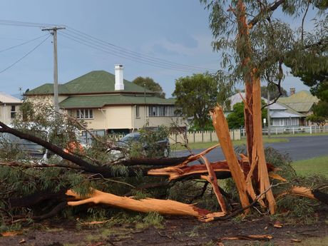 The aftermath of a lightning strike in Slade Park.