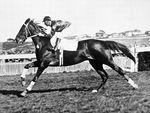 Phar Lap was a huge red nut, hence the nicknames Red Terror or Big Red, who started off as bit of a bush scrubber before coming good, winning three of our biggest races - the Melbourne Cup, the Cox Plate (twice) and the AJC Derby.