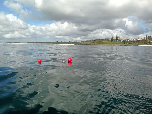A smart drum line was tested off Ballina's Shelley Beach on Tuesday morning in preparation for a wider rollout during the summer holidays.